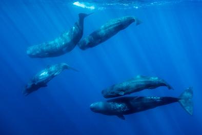 underwater gathering