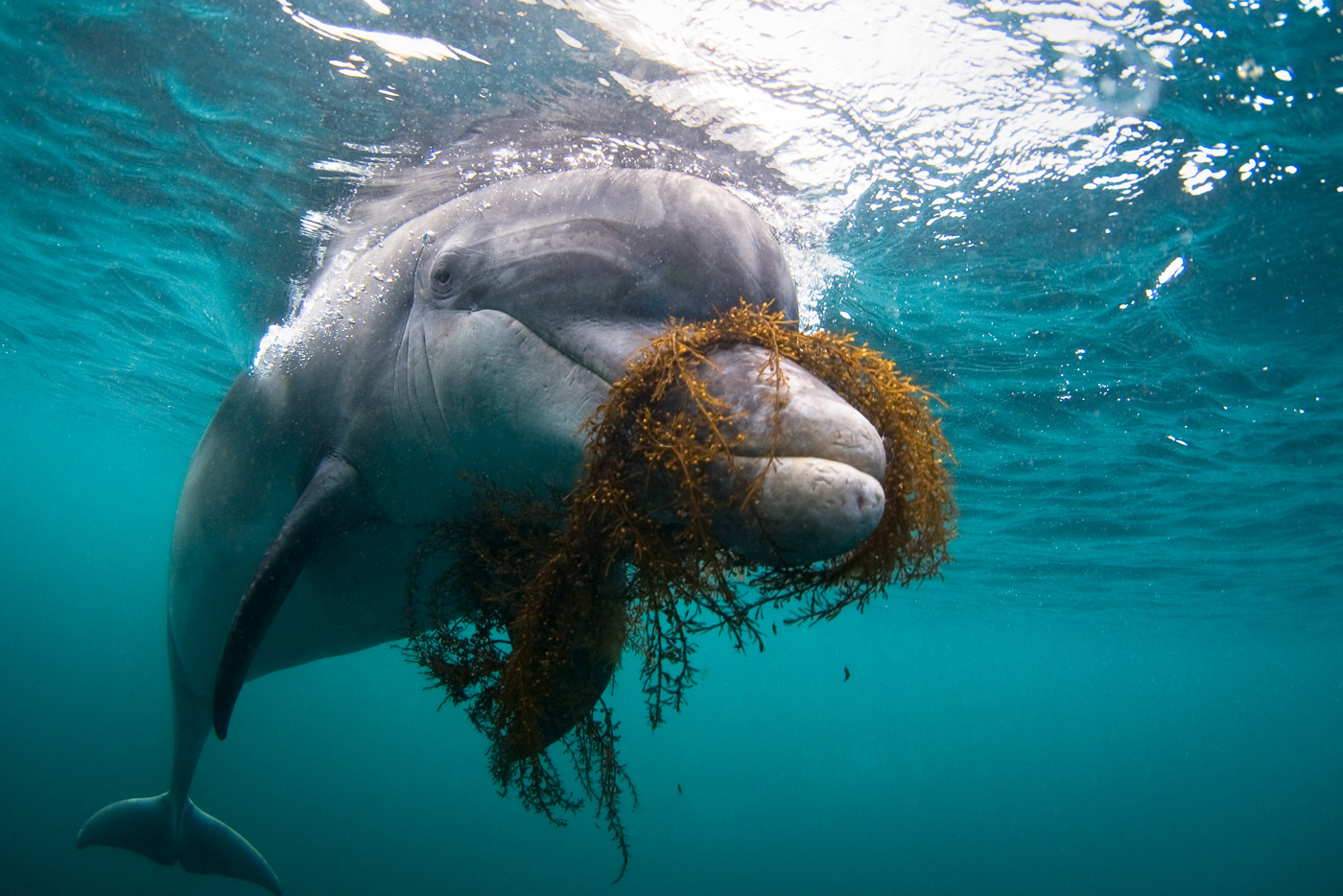 Dusty Dolphin Ireland
