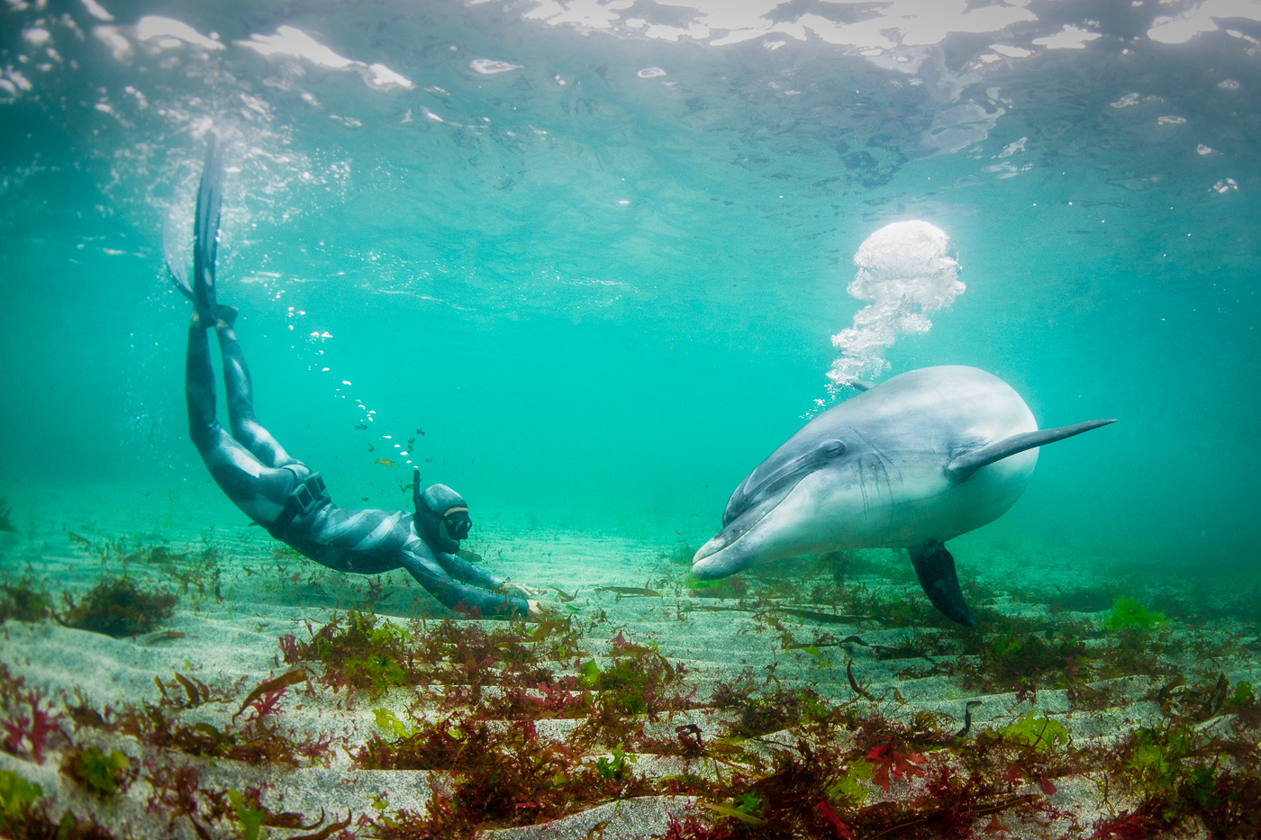 human interaction with wild dolphin underwater