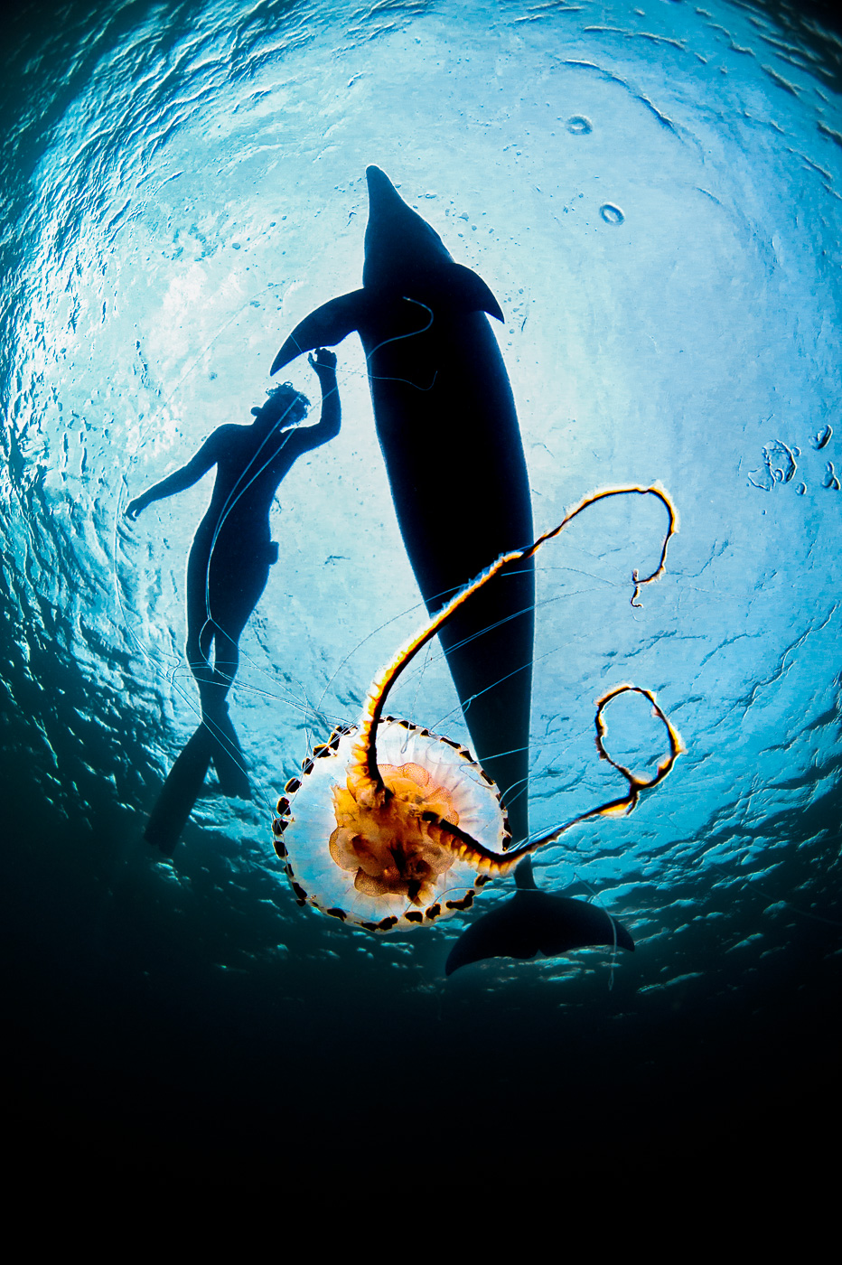 silhouette of dolphin free diver jellyfish