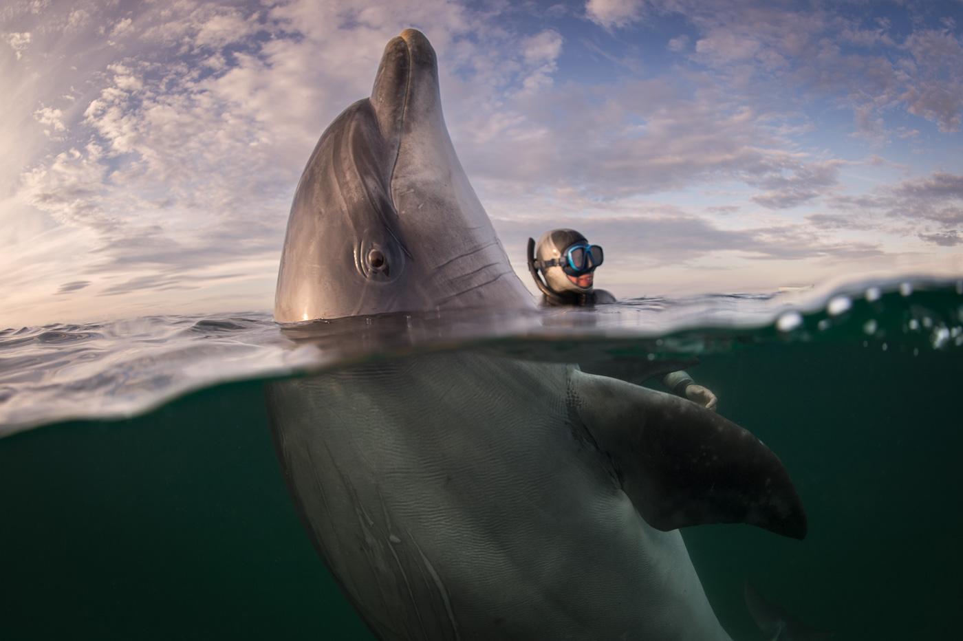 spy hopping dusty dolphin