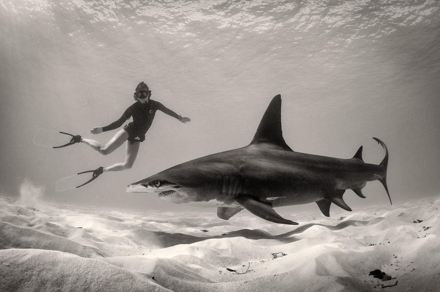 girl free dive with big hammerhead shark