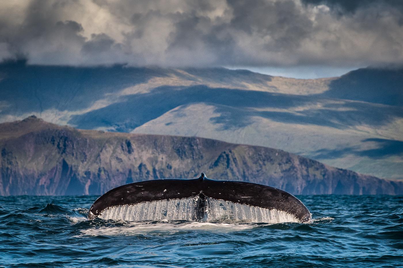humpback_whale_fluke_blasket_island