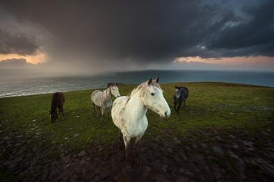Wild Atlantic Horses
