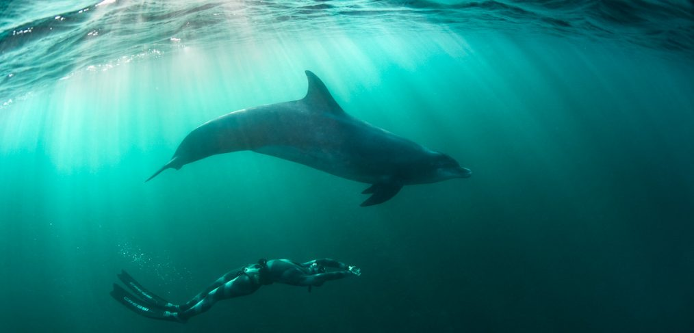 free diver and dolphin in green