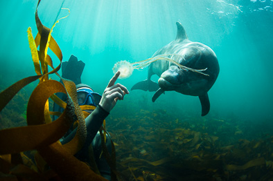 dolphin and girl underwater harmony