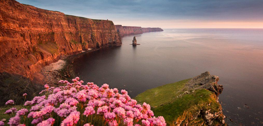 Armeria maritima Ireland