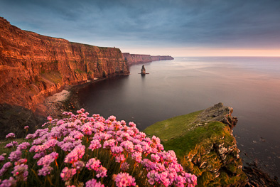 Cliffs of Moher with beautiful Sea Pink also know as Armeria maritima