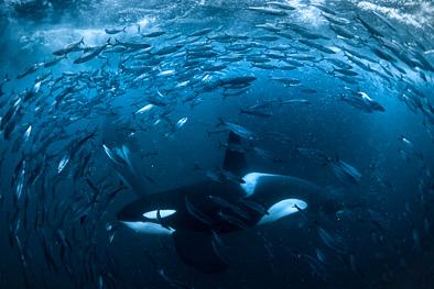 Freediving in the dark