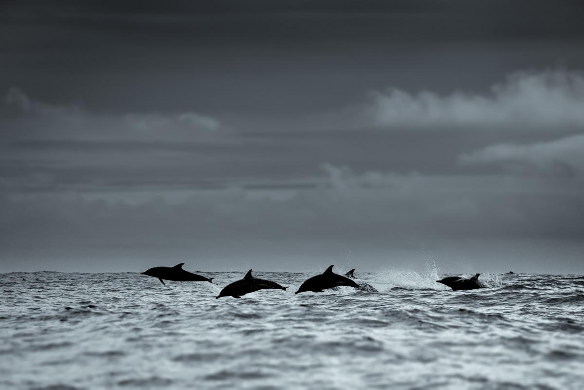arty dolphin photos