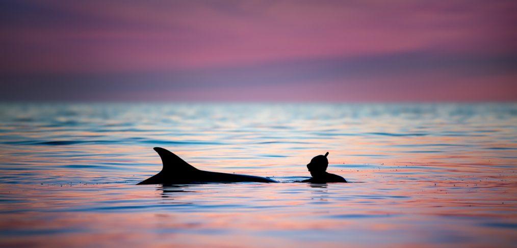 dolphin play Ireland