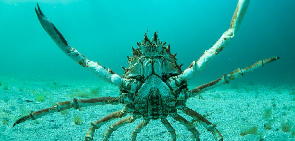crab photos Ireland