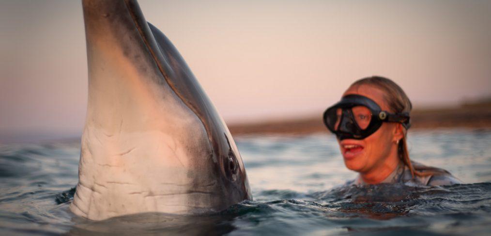 dolphin friend