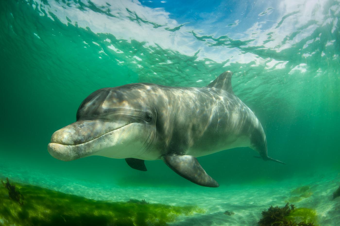 bottlenose dolphin underwater ireland