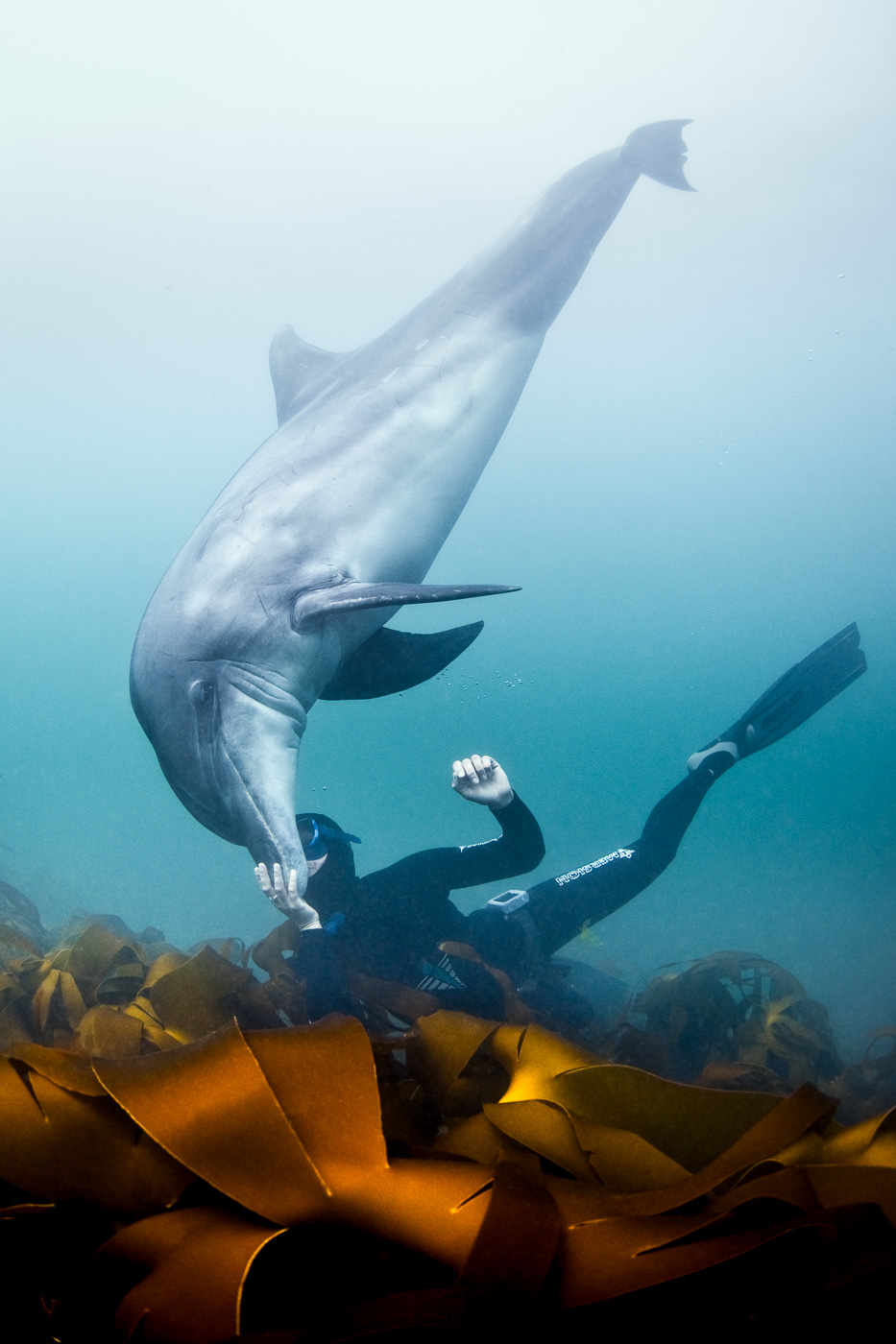 free diving with dolphin love