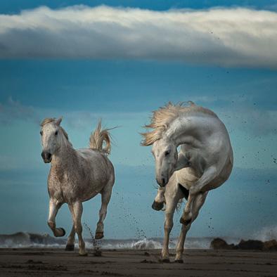 Dali's Sea Horse