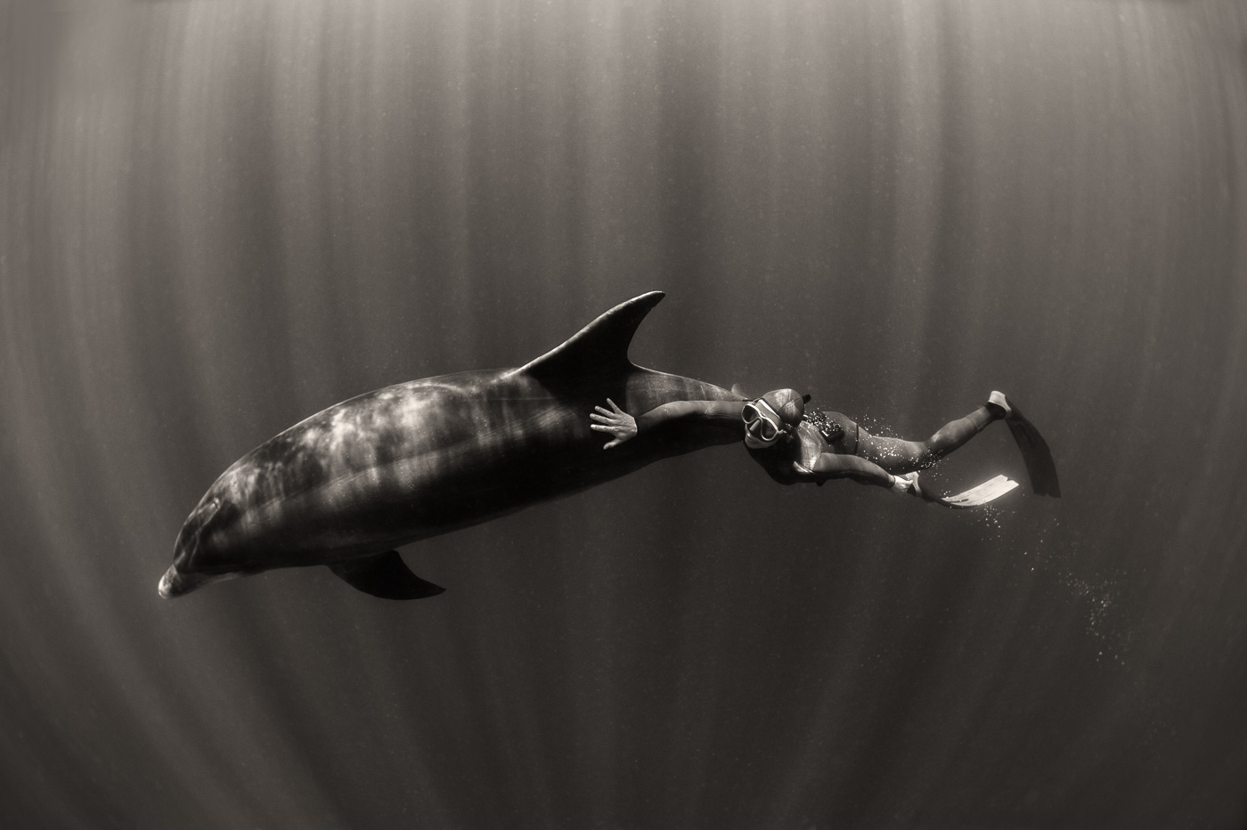 freediver and dolphin black and white
