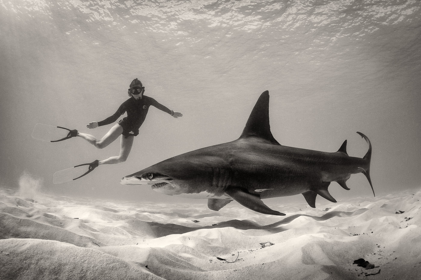 Hammerhead shark with girl freediver black and white george karbus
