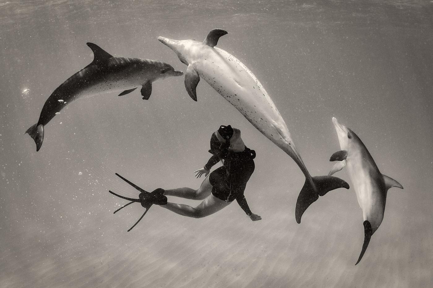wild dolphin dance swimming