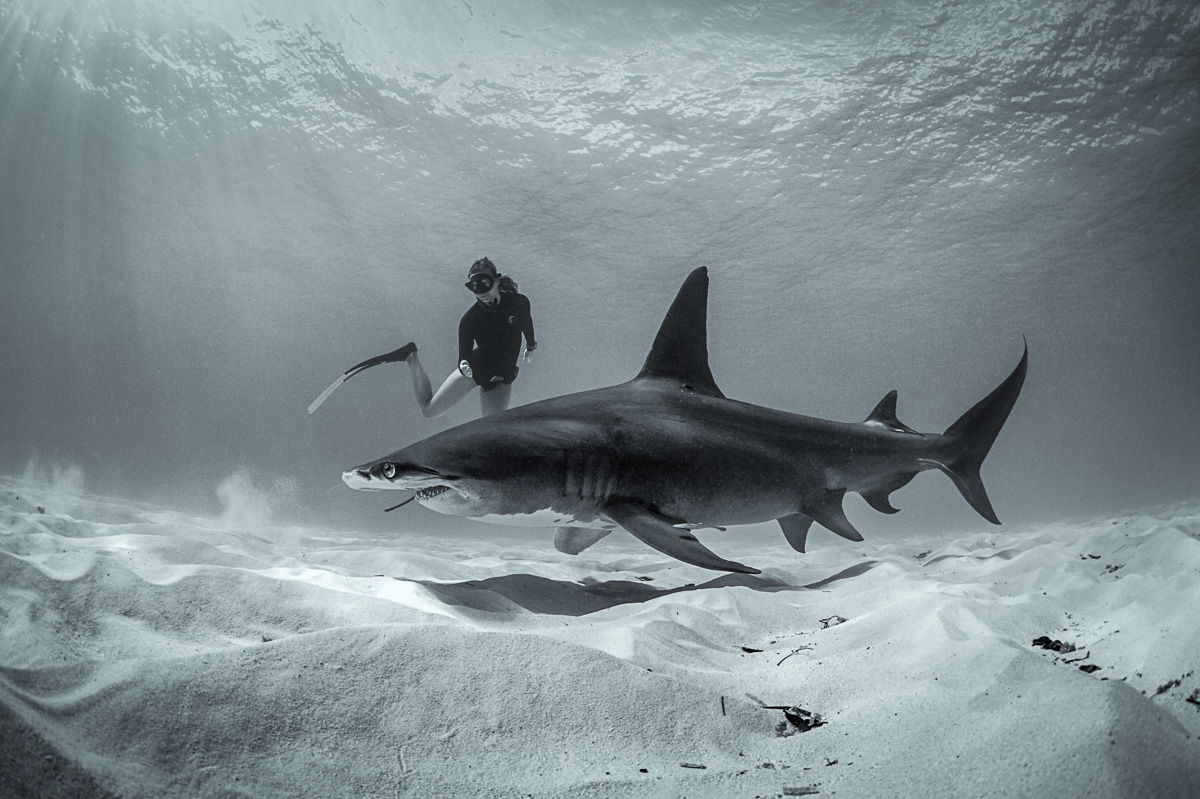 women freedive with great hammerhead shark