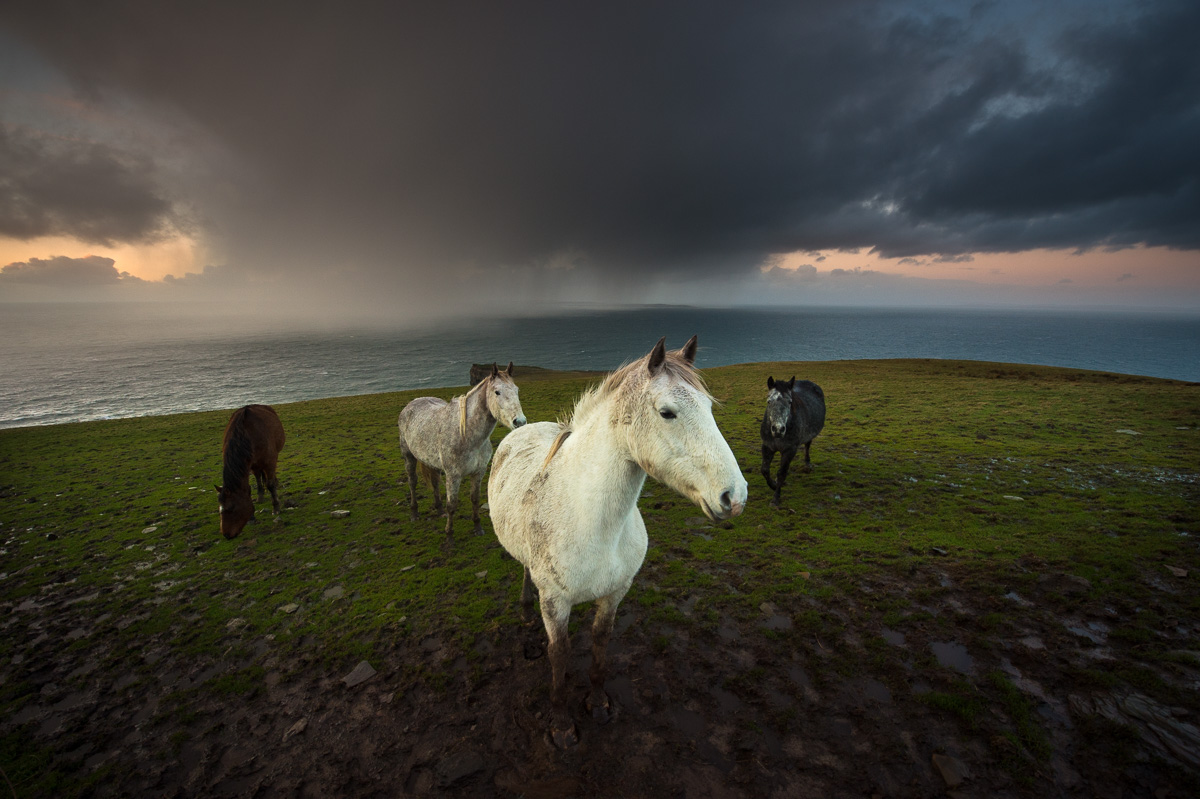 horses at Cliffs of Moher