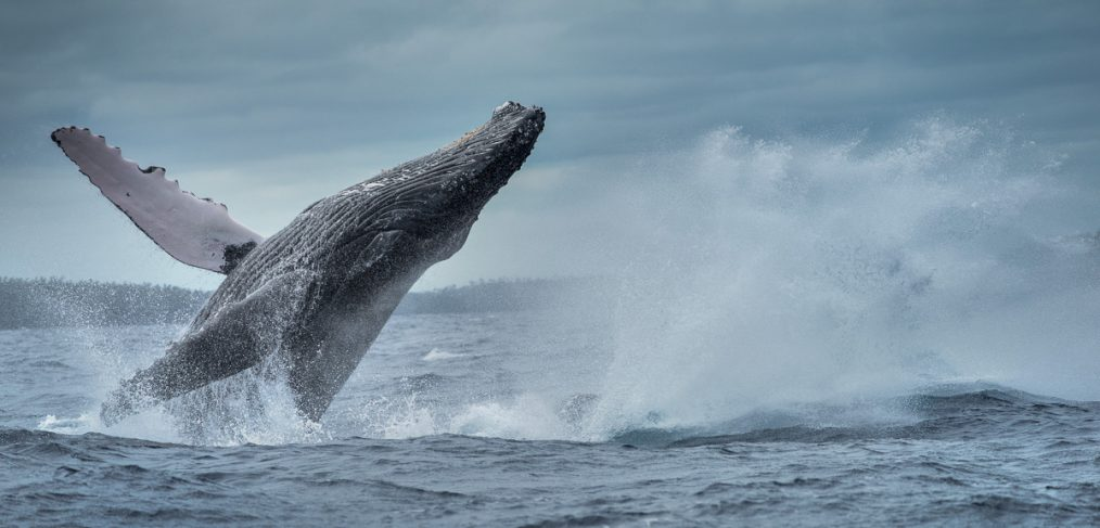two whales jump at the same time