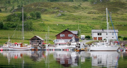 wildife-observations-worldwide-norway-maribell_046-437×234