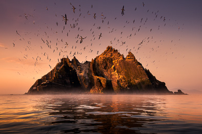 skellig rock gannet colony sunset