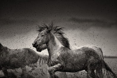wild horse flying hair water