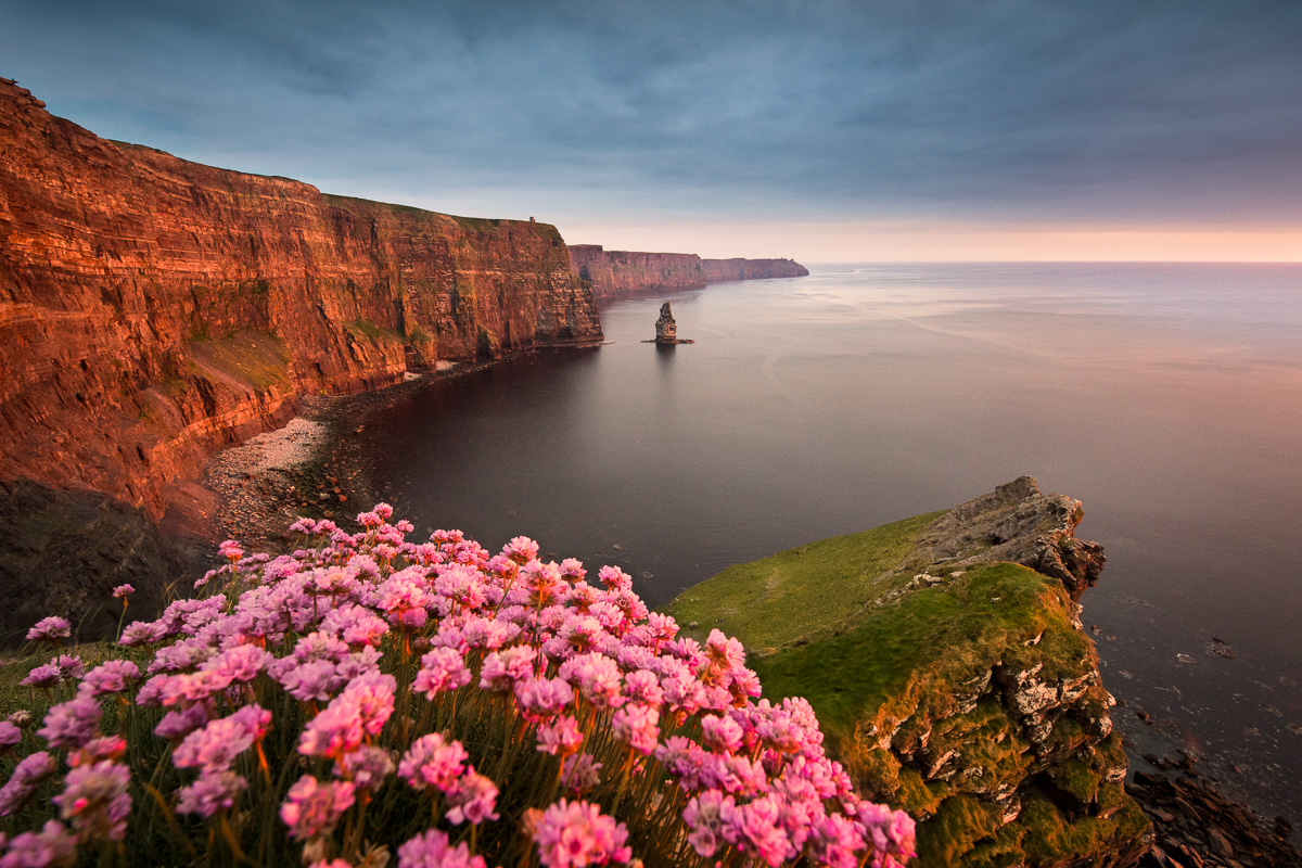 Cliffs of Moher sea pink also known as Armeria maritima