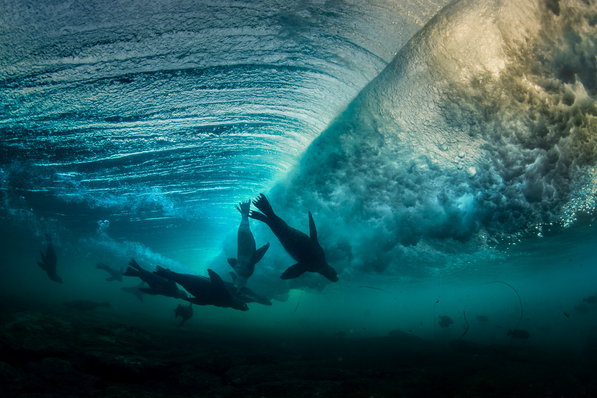 surf_under_waves_sealions