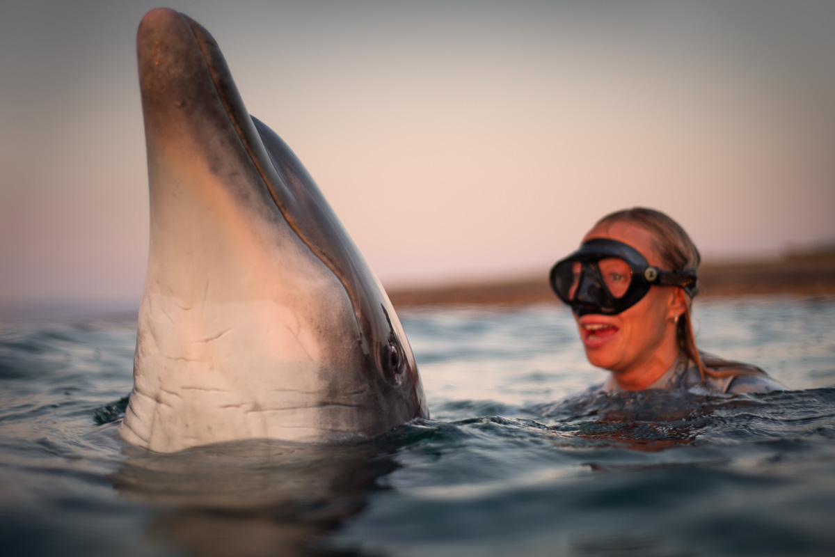 spy hopping dolphin sunset