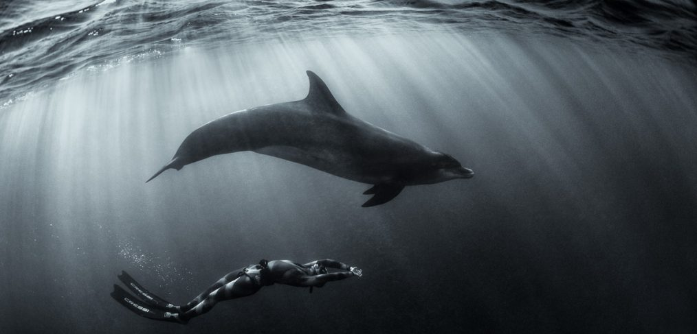 mermaid and dolphin art