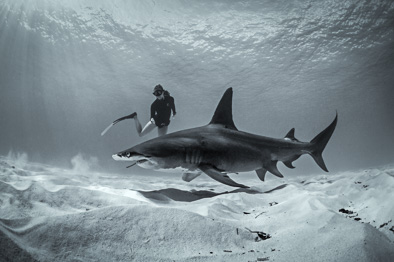 girl dive with big hammerhead shark