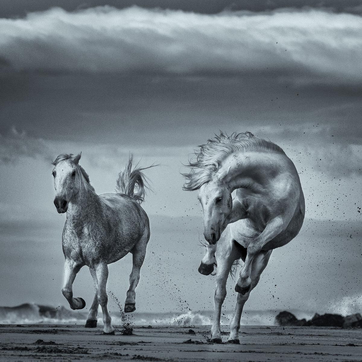 wild camargue horse beach