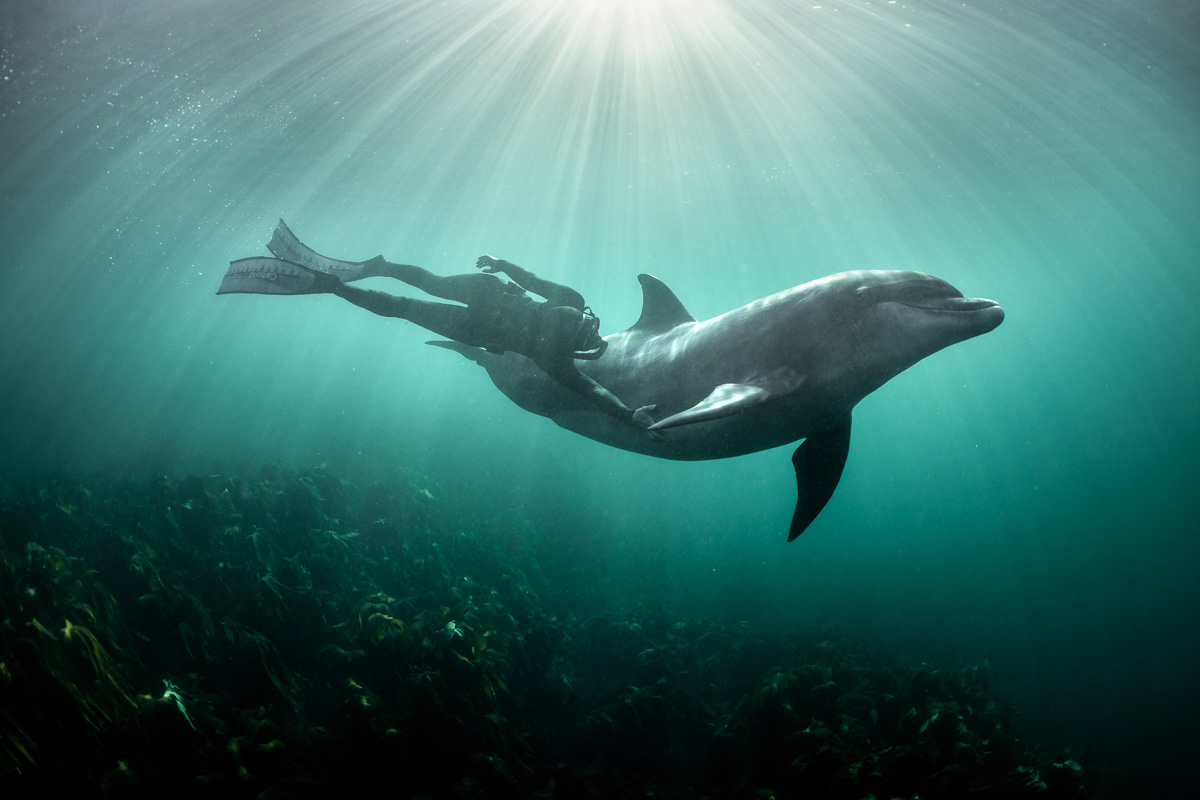 swimming with dolphin in harmony