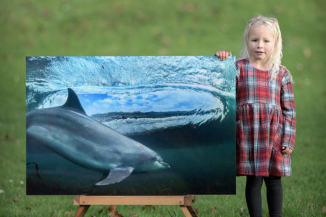 DOLPHIN'S LIVING ROOM WAS €590 Now €390