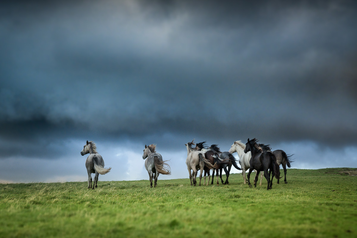 Connemara pony storm sky
