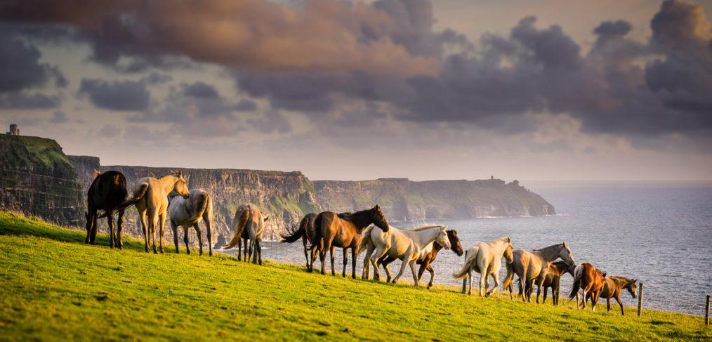 horses ireland wild
