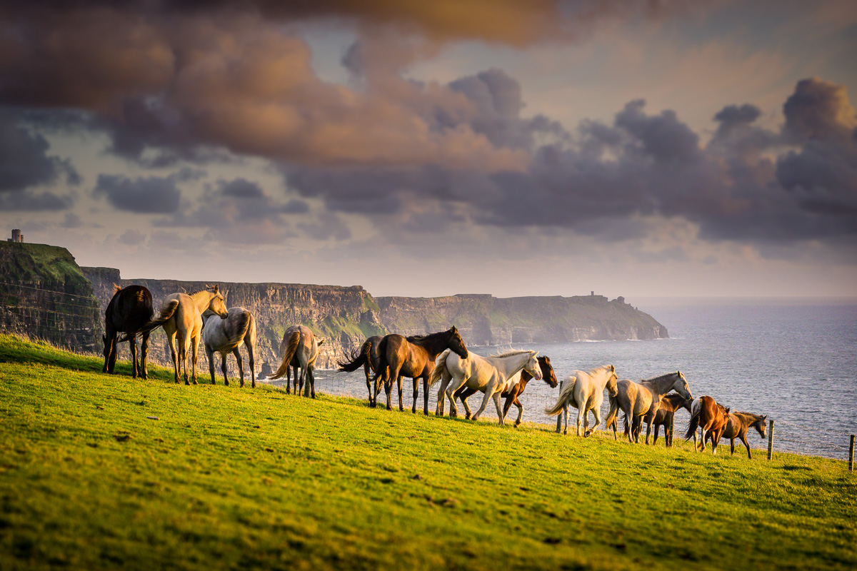 Wild Atlantic Horses at Cliffs of Moher