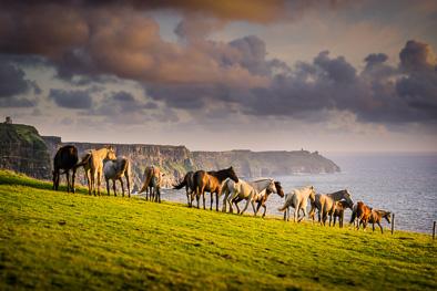 wild horses ireland